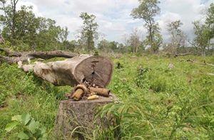 Il disboscamento di una foresta in Cambogia.
