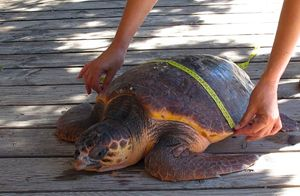 L'attività di tutela delle tartarughe in un campo di volontariato del Wwf.