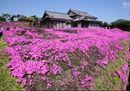 Giapponese crea giardino profumato per la moglie che non vede