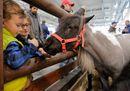 Fieracavalli2017_Veronafiere_Mini Horse.jpg