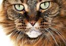 SuperCat Show: 800 gatti, i più belli del mondo