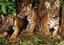 La provocazione del WWF: aiutiamo gli animali a fine serie