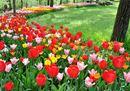 Tutti i colori dei tulipani