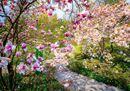 Le fioriture più belle: voi quale preferite?