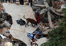 Messico, le foto del terremoto