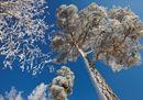 Il lato spettacolare dell'inverno: le immagini